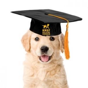 KNGF hond